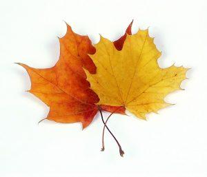 jesień i oodwrócona hipoteka kojarzy się z liśćmi